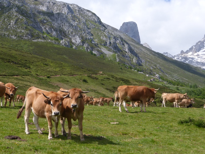Photography of travel: Hiking in Picos de Europa. Routes at your reach